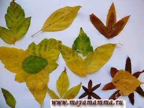 Открытка из осенних листьев