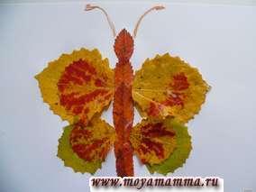 Детские поделки из осенних листьев. Поделка Бабочка из листьев осины и рябины