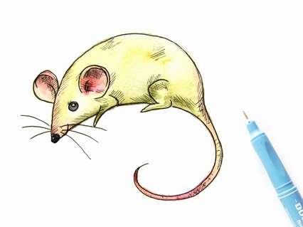 как нарисовать мышку поэтапно для начинающих