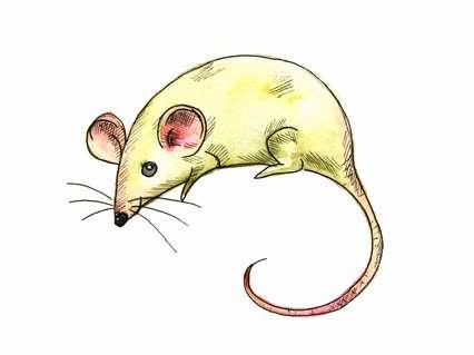 как нарисовать мышку поэтапно