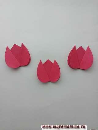 бутоны для тюльпана