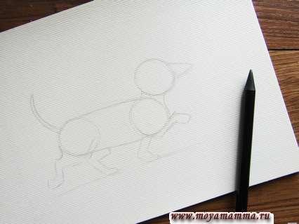 Добавляем с левой стороны рисунка хвостик в виде дугообразной линии, а внизу – короткие лапки в движении.