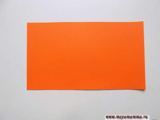 прямоугольник шириной около 12 см