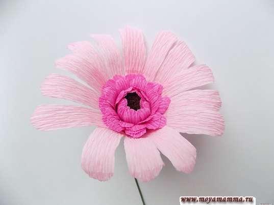 первый ряд светло-розовых лепестков