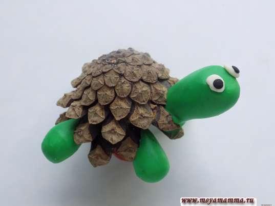 глазки черепахи