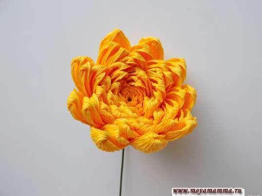 Хризантема из гофрированной бумаги. Приклеивание лепестков