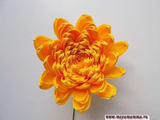 Хризантема из гофрированной бумаги