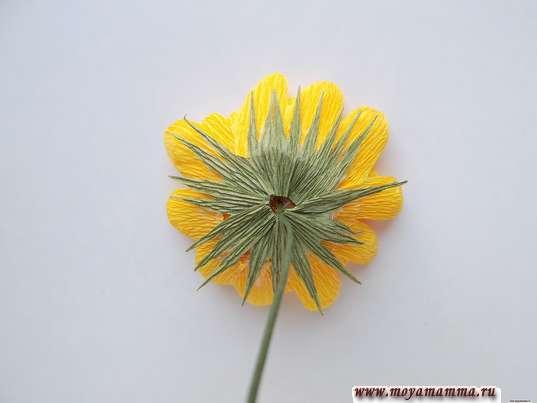Хризантема из гофрированной бумаги. Приклеивание чашелистика
