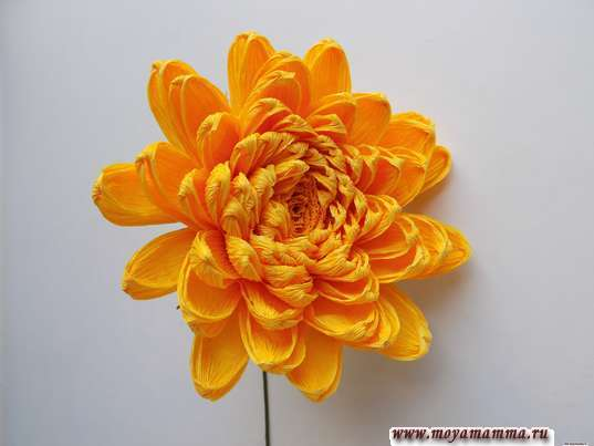 Хризантема из гофрированной бумаги. Расправление лепестков хризантемы