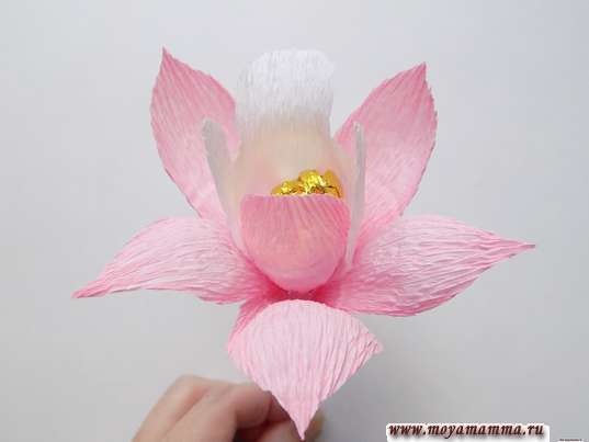 Орхидея из гофрированной бумаги. Приклеивание двойного лепестка