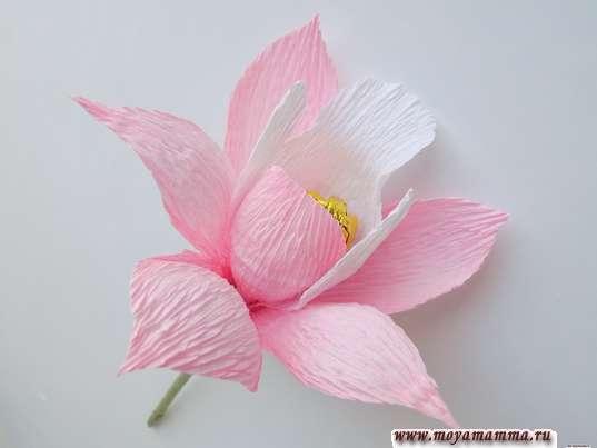 Орхидея из гофрированной бумаги. Цветок орхидеи