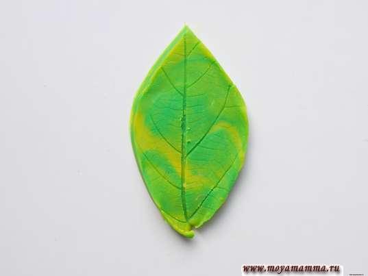 Осенние листья из пластилина. Придание формы листу