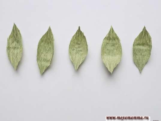 5 листочков