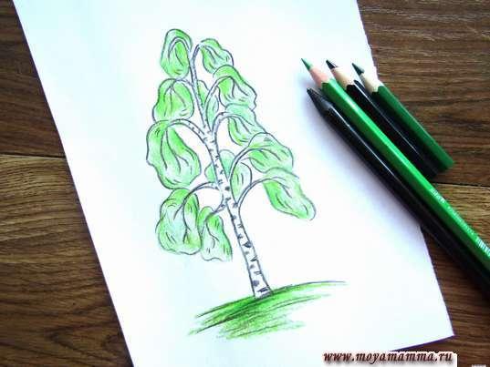 рисунок березы для детей карандашами