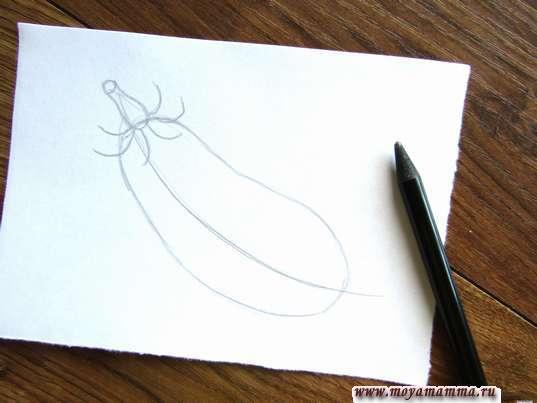 Набросок листочка баклажана