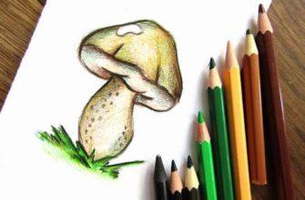 Белый гриб карандашами