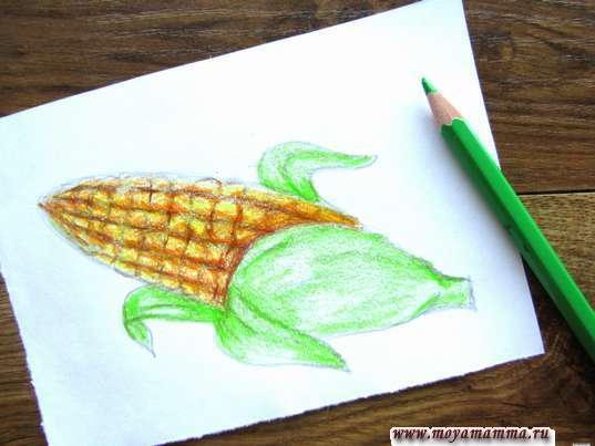 Листочки и основание кукурузы зеленым цветом