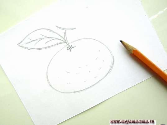 Набросок мандарина