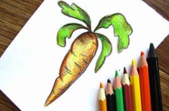морковь карандашами