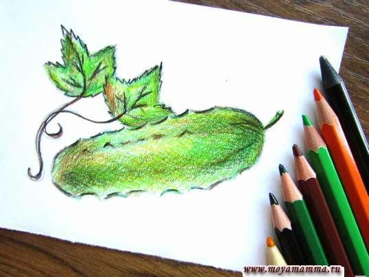 Огурец карандашами