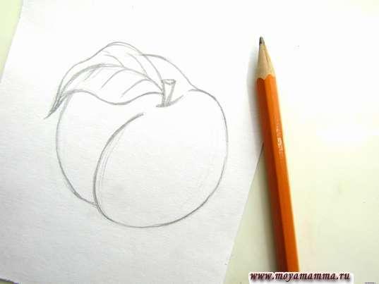 Готовый набросок персика