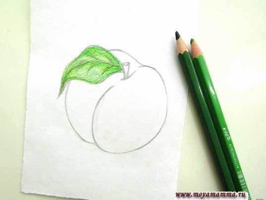 Закрашивание зеленого листика