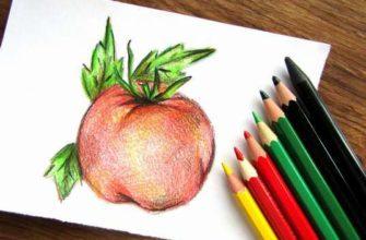 помидор карандашами
