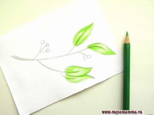 Весенние листочки светло-зеленым карандашом