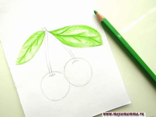 листочки светло-зеленым цветом