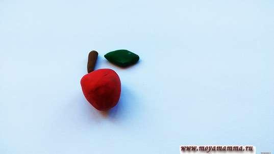 Детали яблока