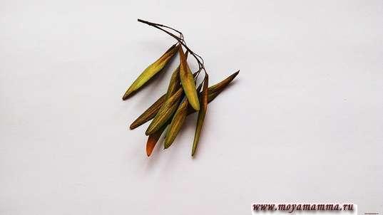 веточка продолговатых семян, сухих, которые предназначены для гривы и хвоста