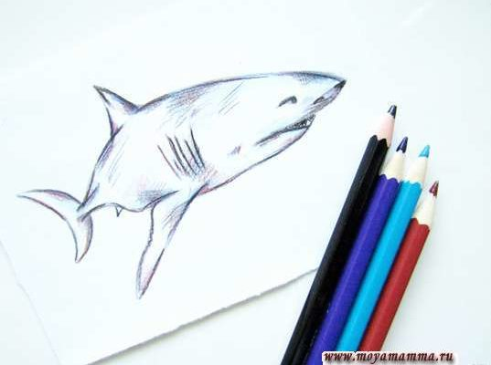 рисунок для детей акула