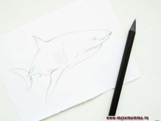 Готовый набросок акулы