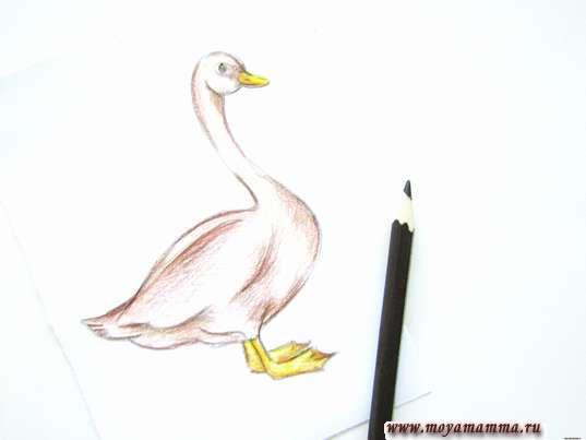 Прорабатывание глаза и всего рисунка темно-коричневым карандашом.