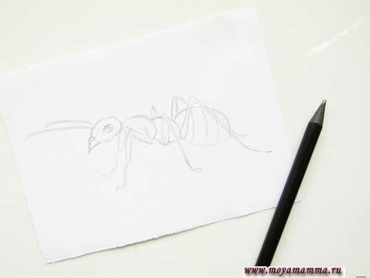Готовый набросок муравья