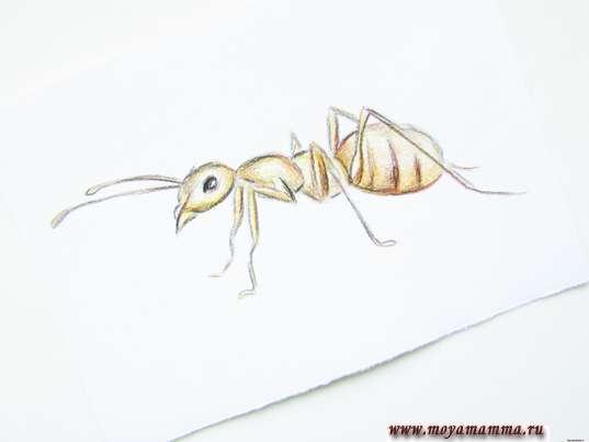рисунок для детей карандашом муравей
