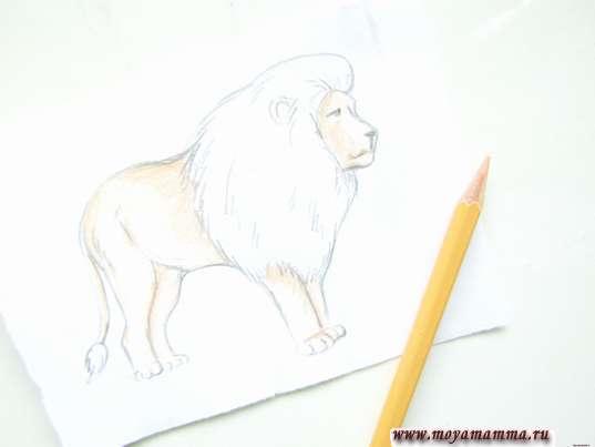 Бежевым карандашом прокрашиваем мордочку, туловище, хвост и лапы льва.