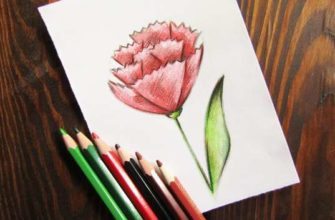 рисунок гвоздики карандашами