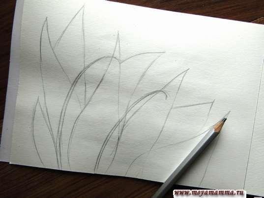 Набросок стеблей