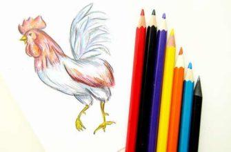 рисунок петуха для детей