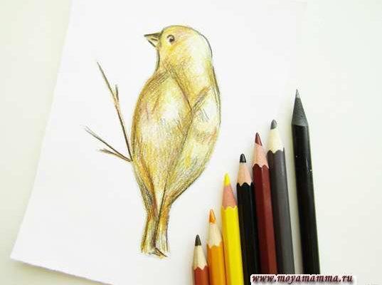 рисунок птички для детей