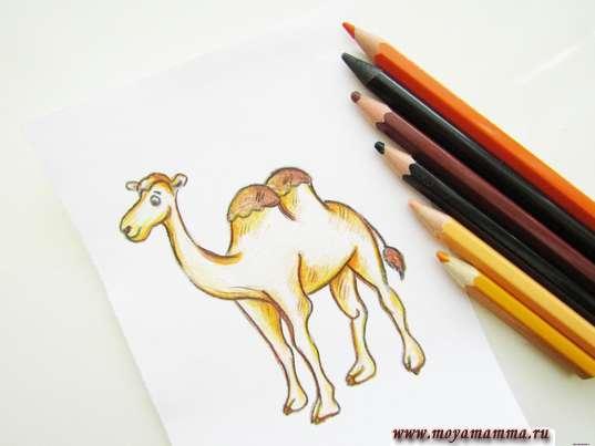 рисунок верблюд карандашами