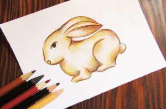 рисунок заяц карандашами
