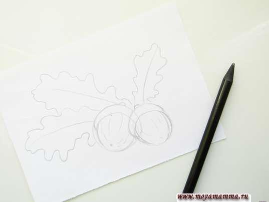 Готовый набросок желудей и листьев дуба