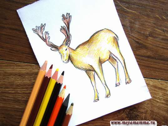 рисунок для детей олень
