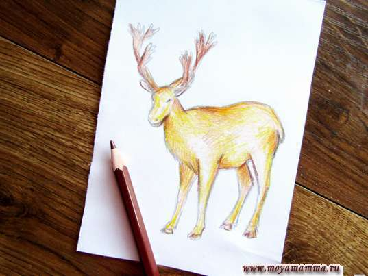 Использование коричневого карандаша