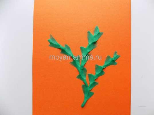 Формирование листочков мимозы