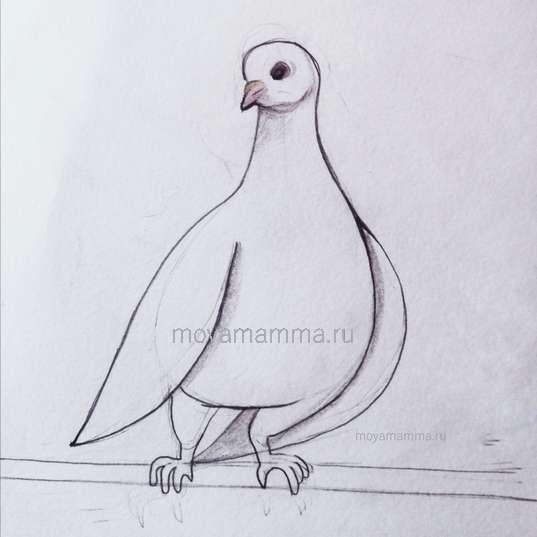 Раскрашивание голубя