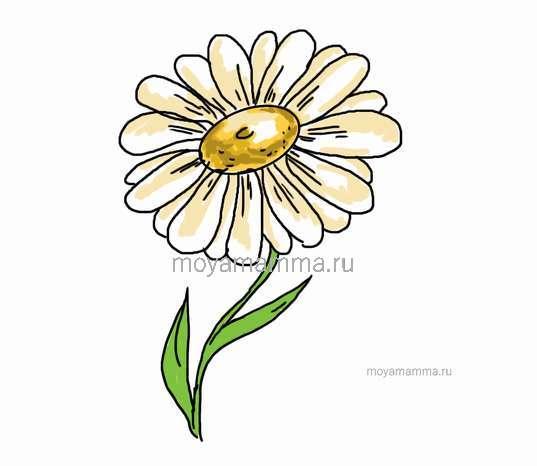 Как нарисовать ромашку. Центр цветка желтым и горчичным цветом